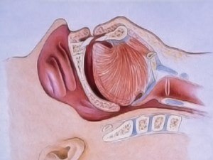 Sleep Disorder Dentistry: Snoring & Sleep Apnea – Part 1